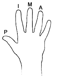 Carpaltunnel besides Acoustic Guitar Fingerstyle further S Flush Door Pull likewise Learn Hindi Palmistry also guitar Chords org. on diagram of ring finger